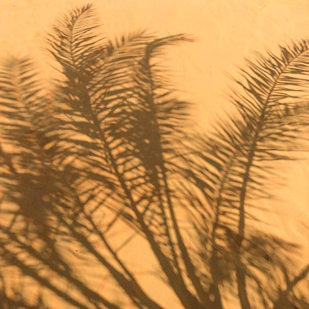 Palme Wüste