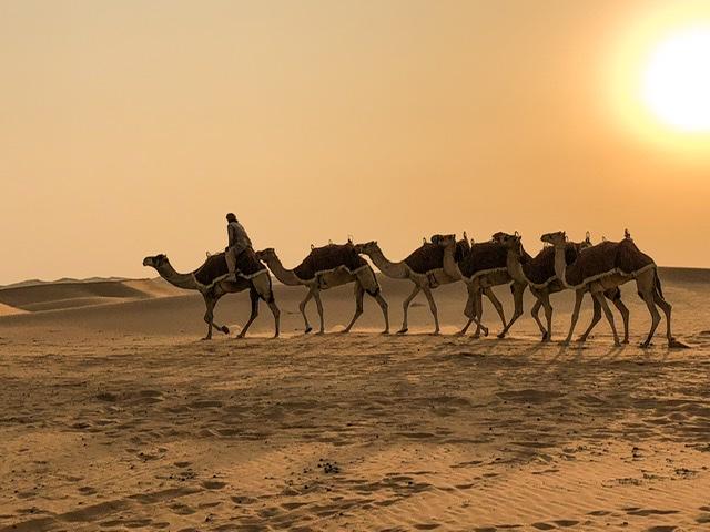 Kamel Wüste