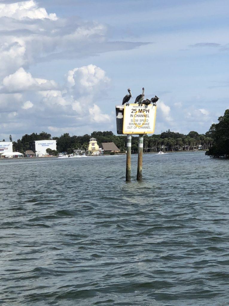 Pelikan Florida