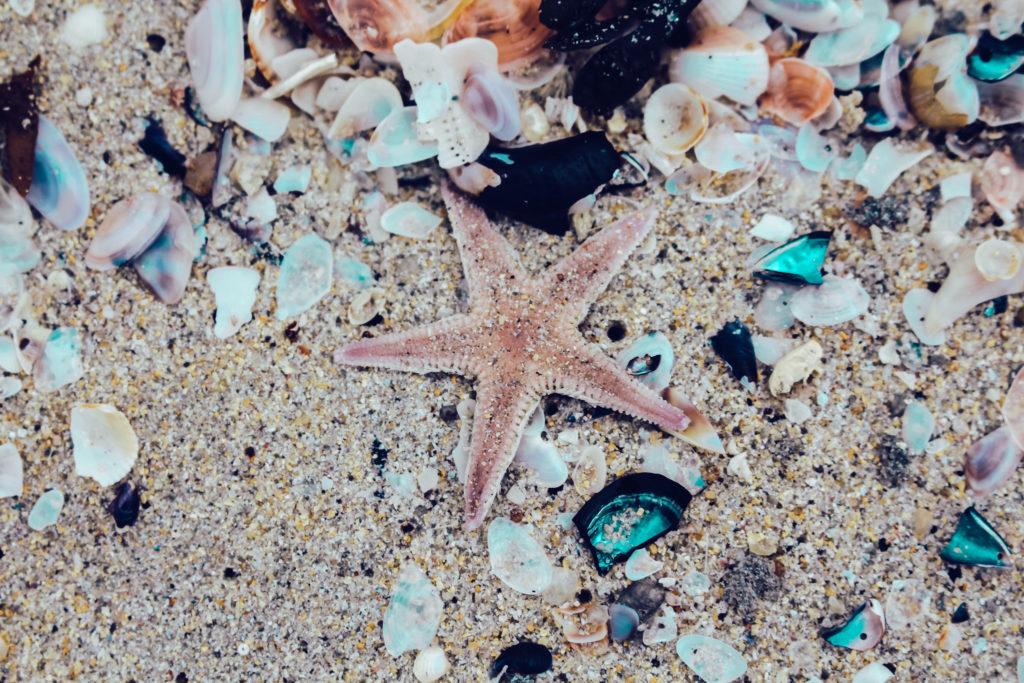 Beach Schottland